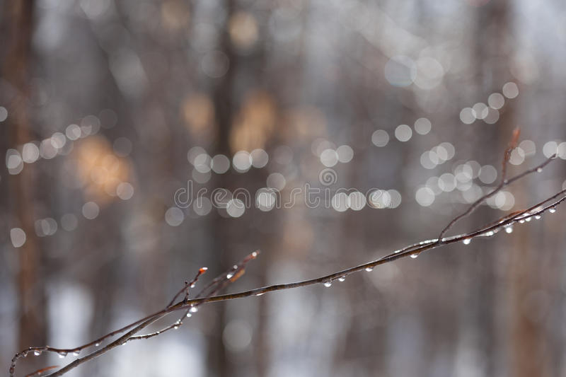 A branch with water droplets with a natural bokeh in the woods stock photo