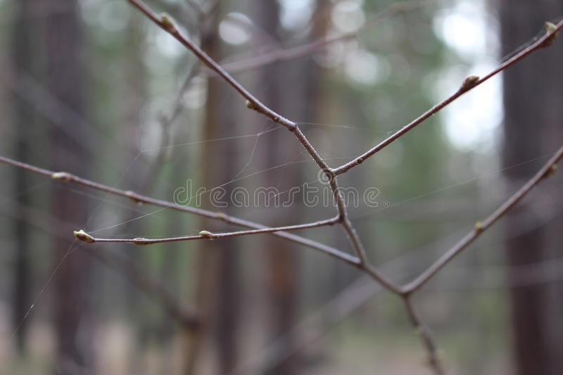 The branch in the web stock photos