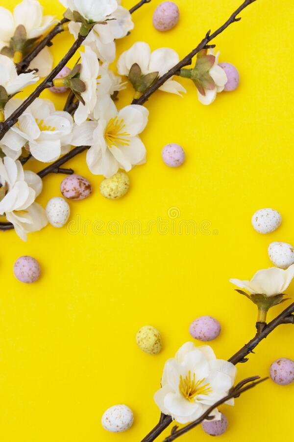 Branch of white flowers on yellow background with candy, easter chocolate eggs. Easter mock up. Minimalistic Spring background stock image