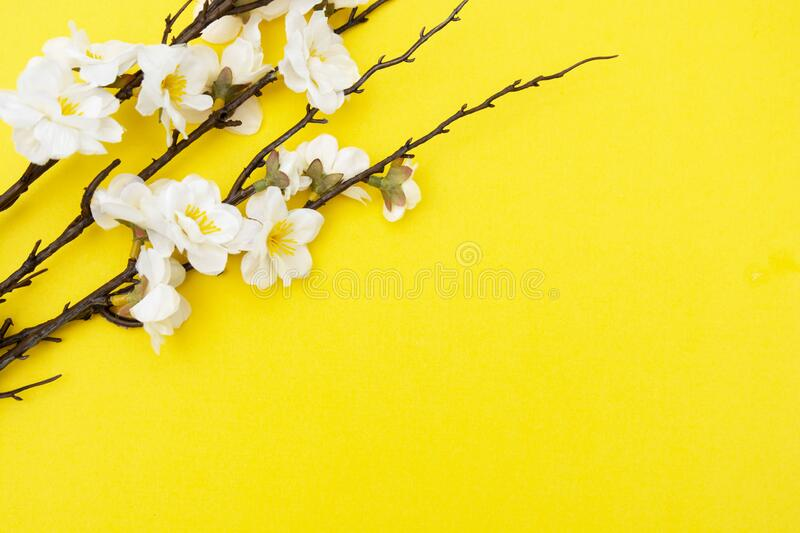Branch of white flowers on yellow background Spring floral mock up. Minimalistic Spring background with copy space. Flat lay royalty free stock photos