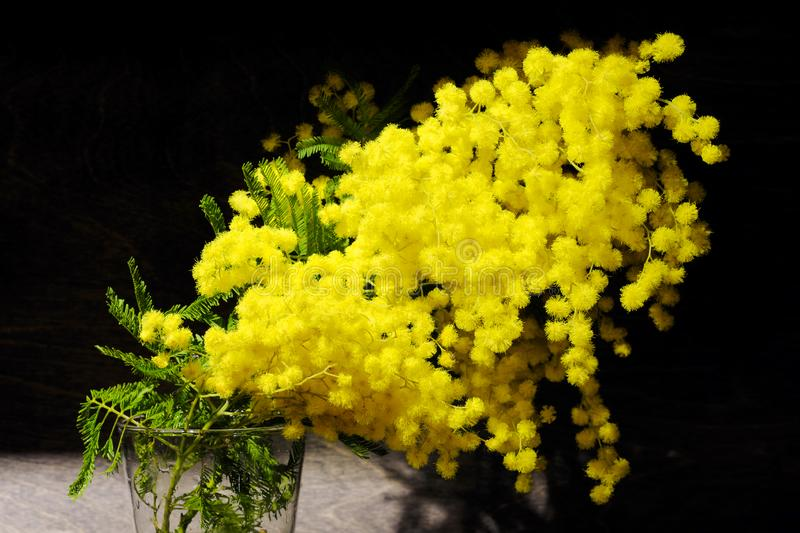 A branch of yellow flowers of mimosa in a glass vase on a black background. royalty free stock images