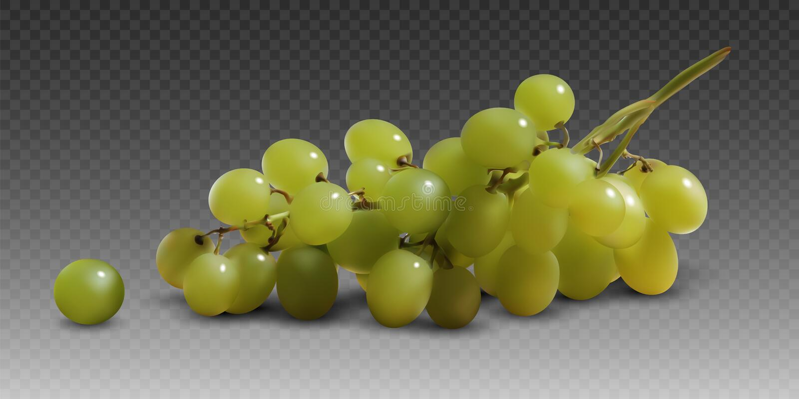A branch of yellow ripe grapes on a gray checkered background.  3D vector. High detailed realistic illustration. A branch of yellow ripe grapes on a gray vector illustration