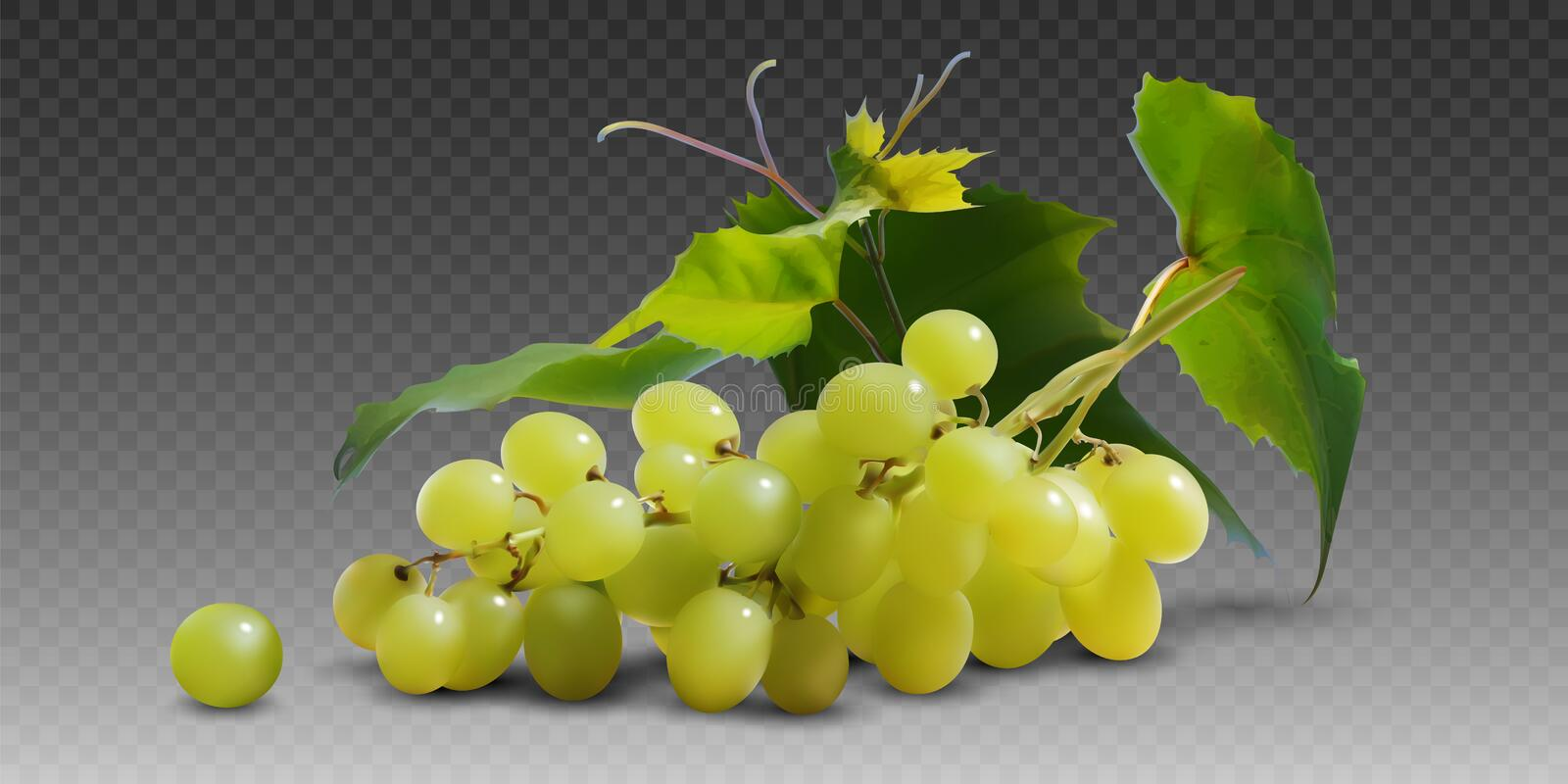 A branch of yellow ripe grapes with leaves on a gray checkered background.  3D vector. High detailed realistic illustration. A branch of yellow ripe grapes on a stock illustration