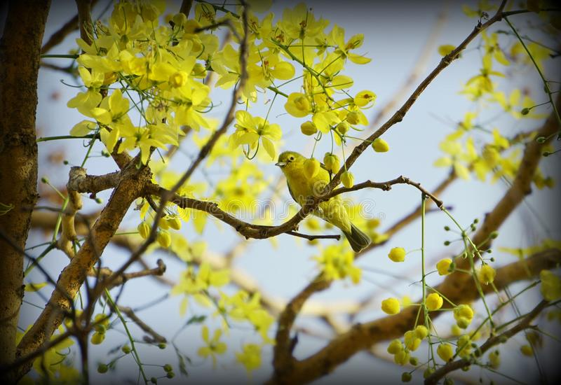 Branch, Yellow, Tree, Spring stock image
