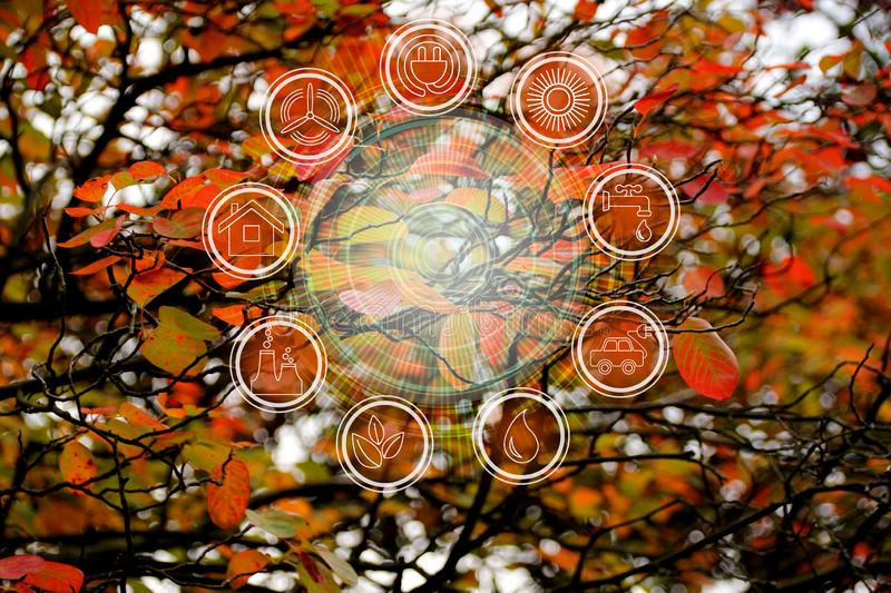 Branchbeautiful autumn background of red foliage of trees and environmental protection elements icons, ecological concept, close-. Up stock images