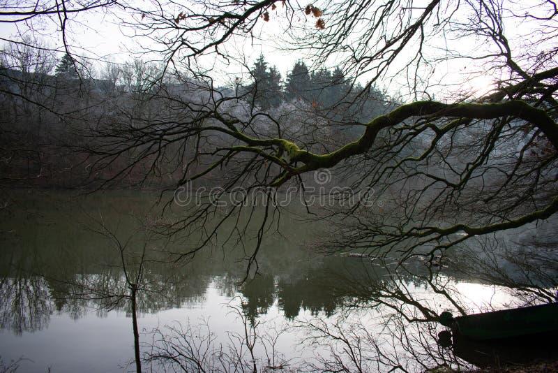 Branche дерева над рекой в зиме стоковые фотографии rf