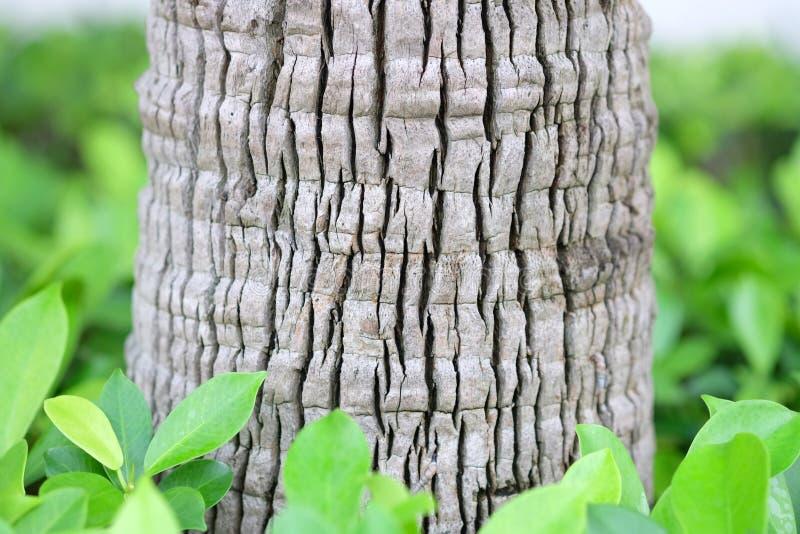 Branche blanche photos libres de droits