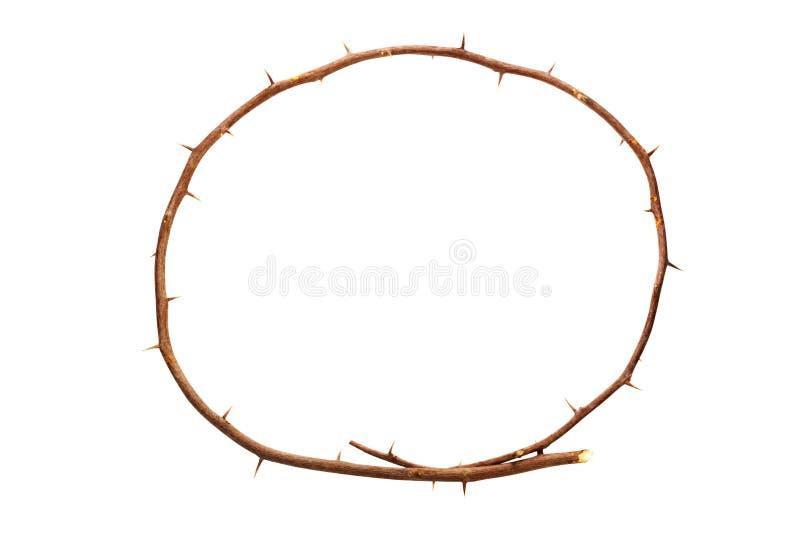Branche circulaire de Brown avec les épines pointues saillantes images stock