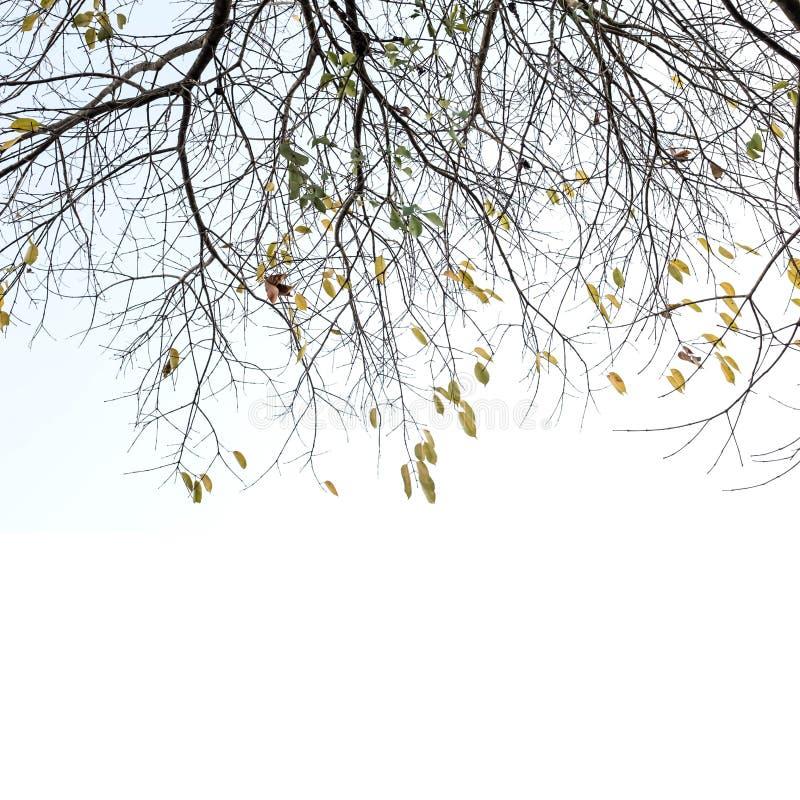 Branche d'arbre image stock