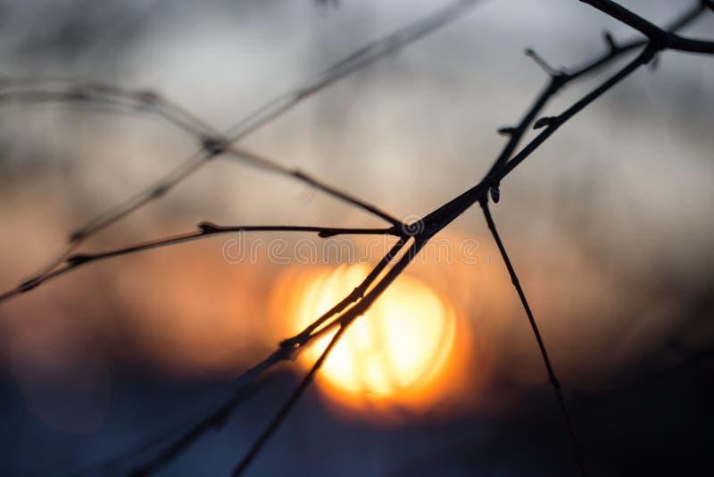 Branche d'arbre avec des bourgeons sur le fond de coucher du soleil photos stock
