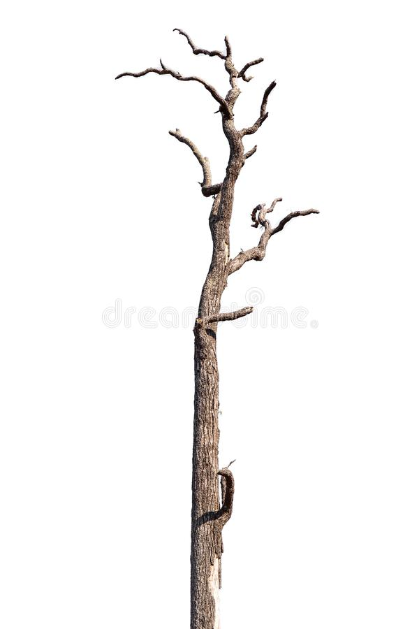 Branche d'arbre avec la petite fleur jaune d'isolement sur le fond blanc image libre de droits