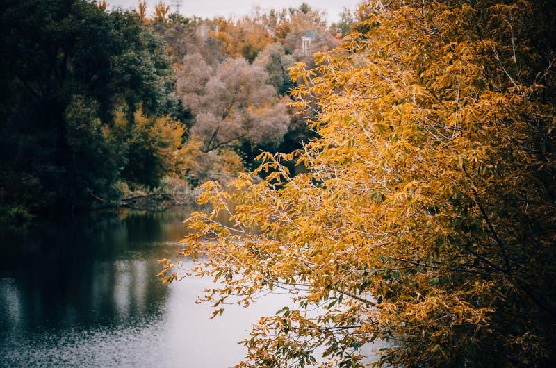 Branche d'arbre avec les feuilles jaunes image libre de droits