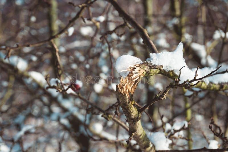 Branche d'arbre cassée couverte de neige dans la forêt images stock