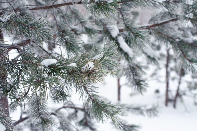branche d'arbre couverte de neige au parc, froid tonned Conceprt d'hiver image libre de droits