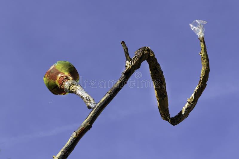 Branche d'arbre décorée du papier, du plastique et d'un bol en verre photographie stock
