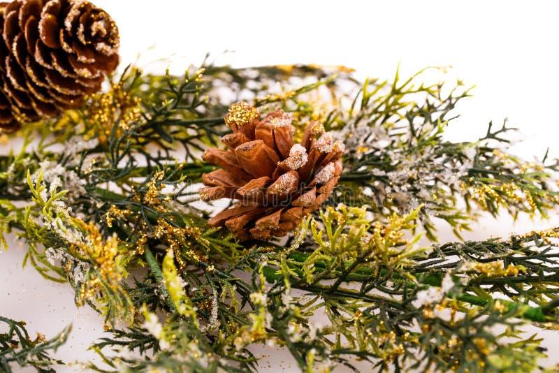 Branche d'arbre de Noël photos libres de droits