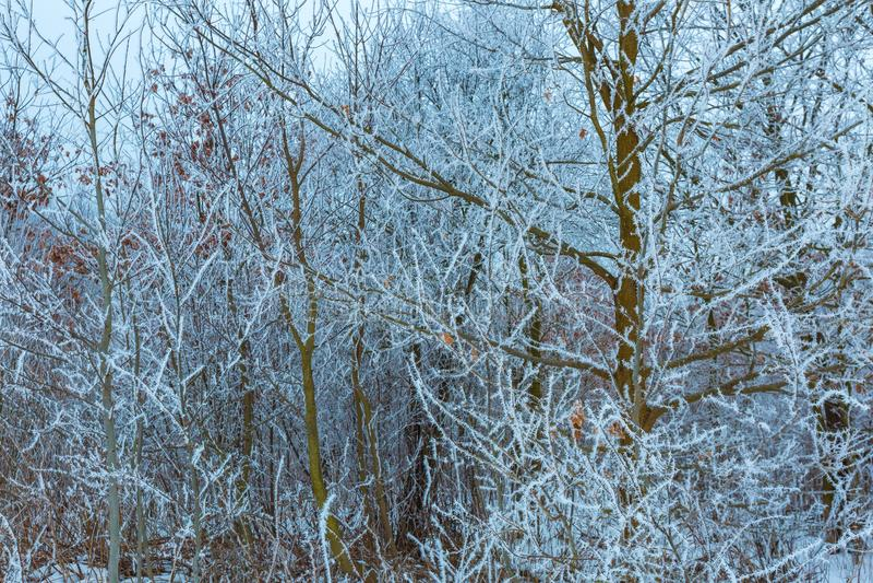 Branche d'arbre givrée photo libre de droits