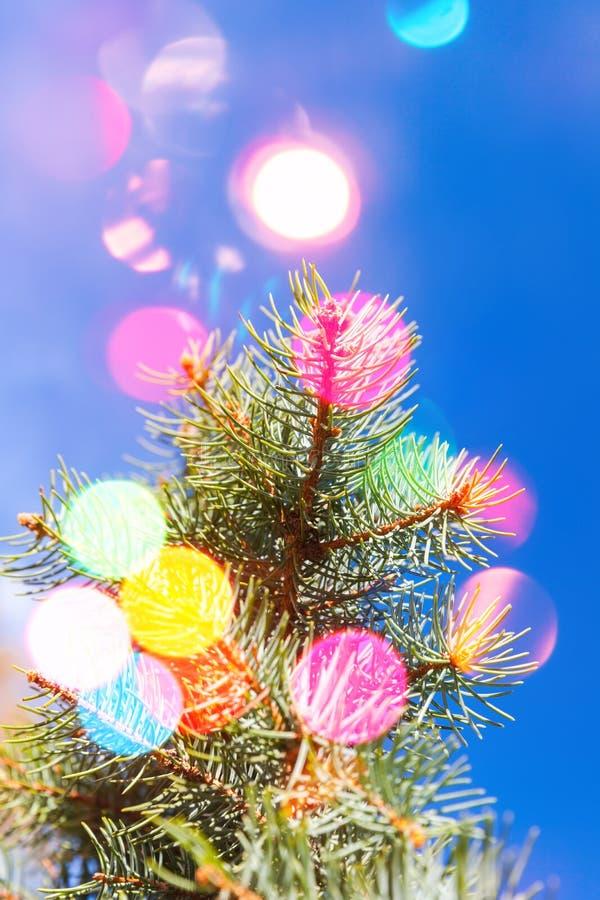 Branche d'arbre impeccable avec les lumières brouillées colorées photos libres de droits