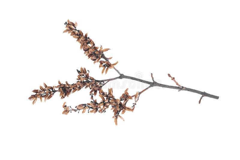 Branche d'arbre images stock