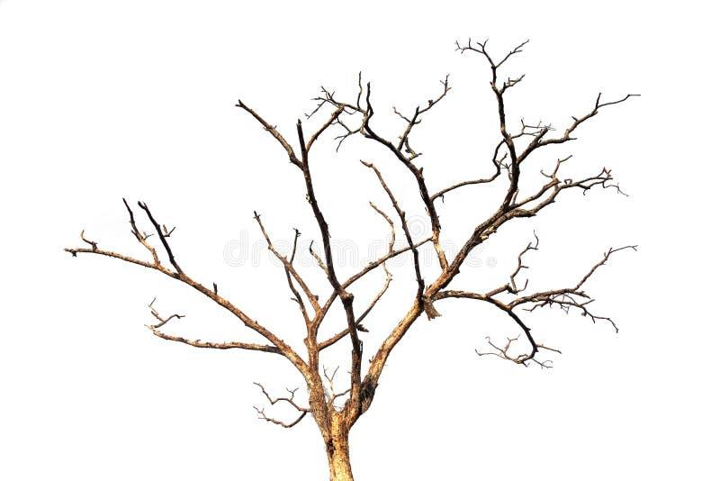 Branche d'arbre morte d'isolement image libre de droits
