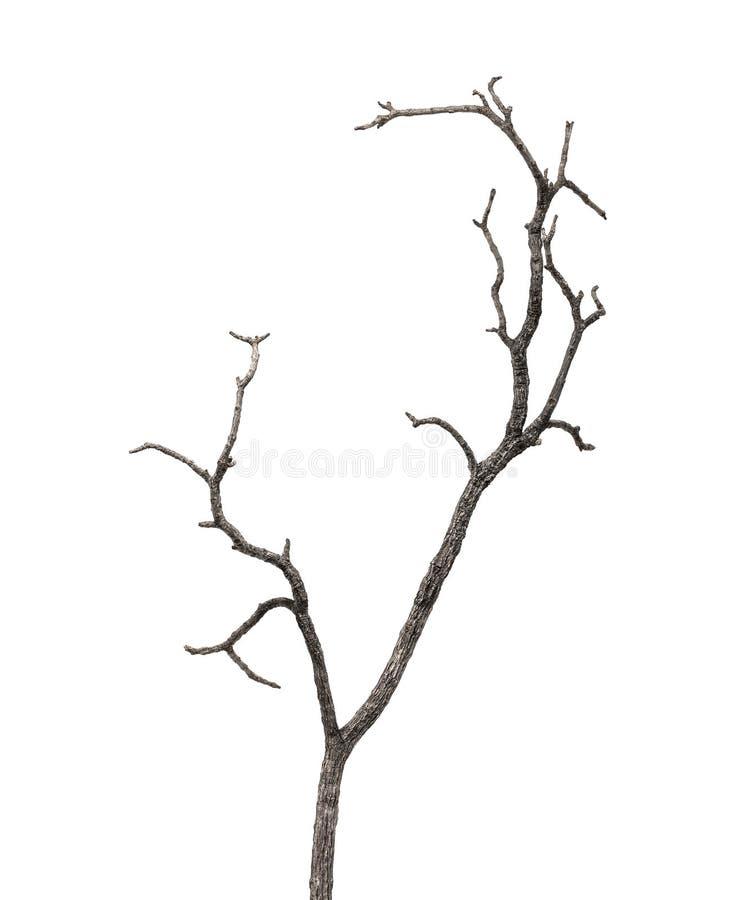 Branche d'arbre morte d'isolement sur le fond blanc photos libres de droits