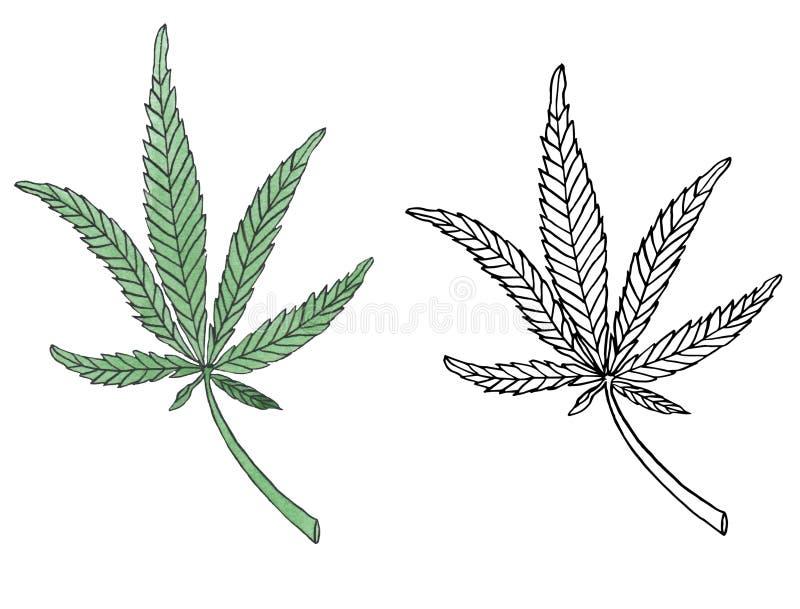 Branche d'illustration d'aquarelle de congé vert de chanvre illustration de vecteur