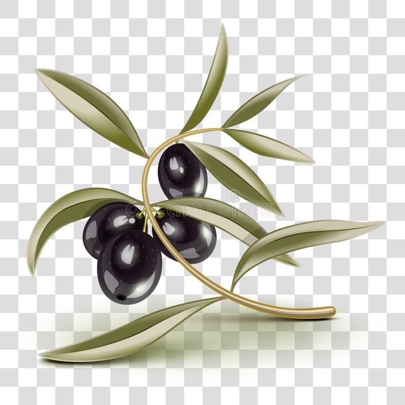 Branche d'olives noires editable transparente illustration libre de droits