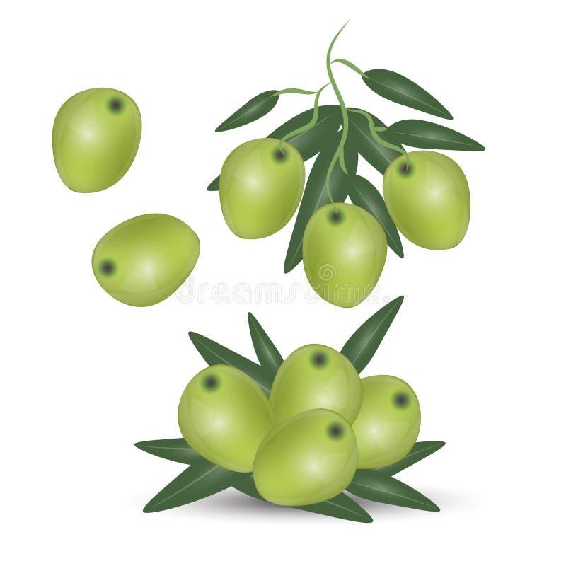 Branche d'olives vertes d'isolement sur le fond blanc Concevez pour l'huile d'olive, cosmétiques, produits de soins de santé illustration libre de droits
