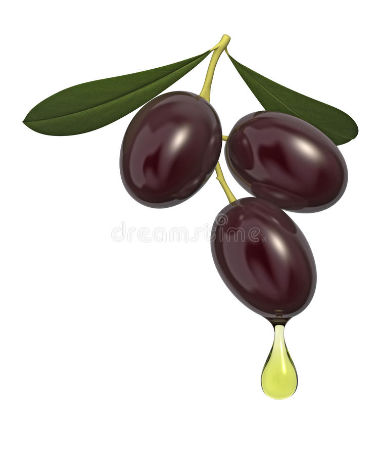 Branche d'olivier illustration de vecteur