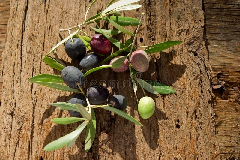 Branche d'olivier photos stock