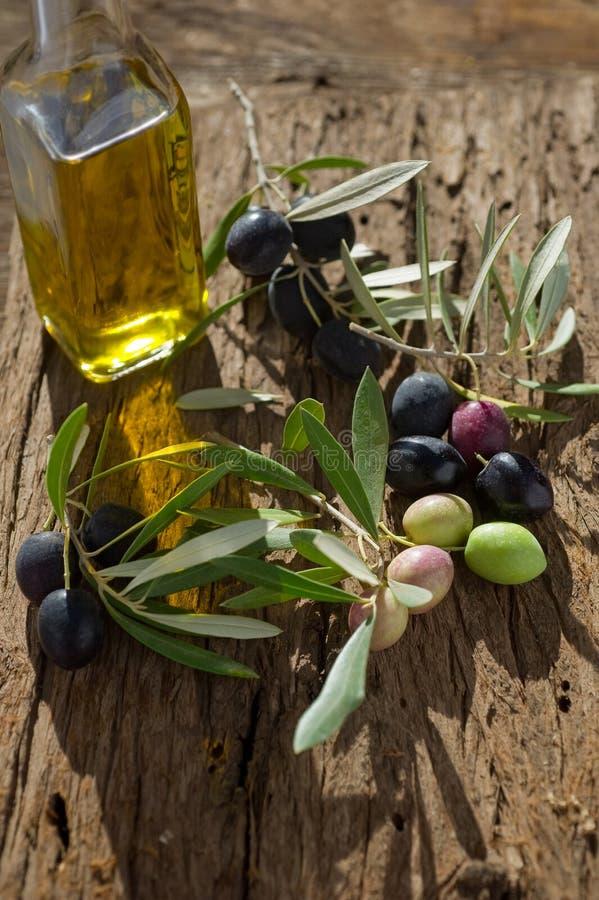 Branche d'olivier avec le pétrole photos libres de droits