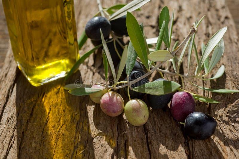 Branche d'olivier avec le pétrole photo stock