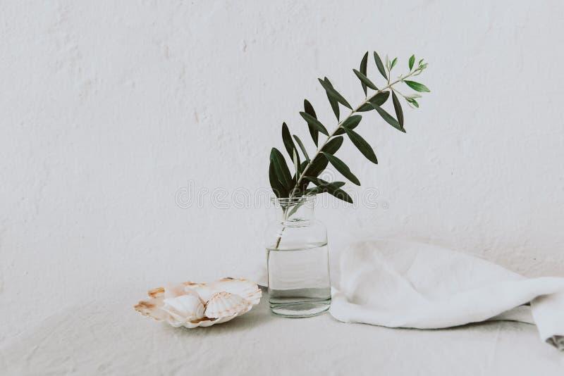 Branche d'olivier dans la bouteille minimal intérieur de meubles photos stock