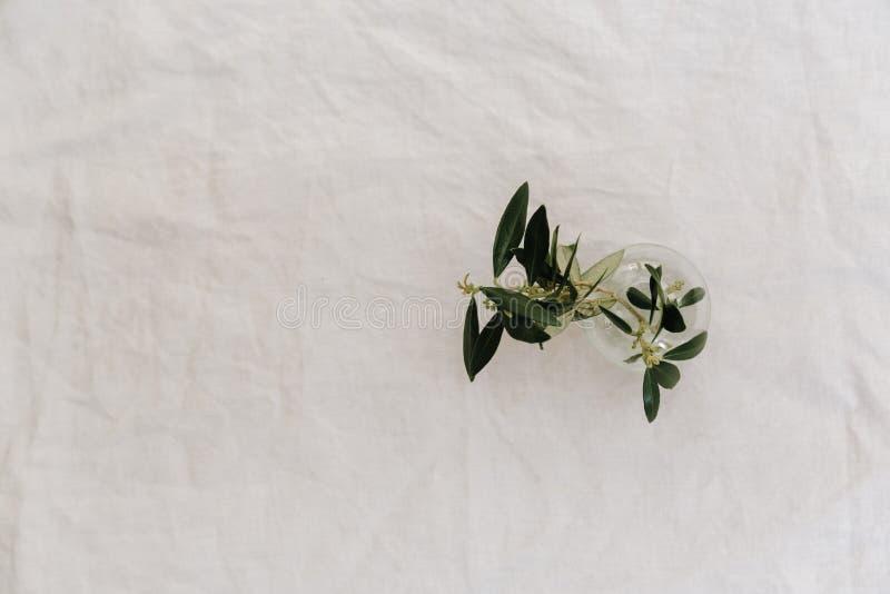 Branche d'olivier sur le fond de toile, minimaliste images libres de droits
