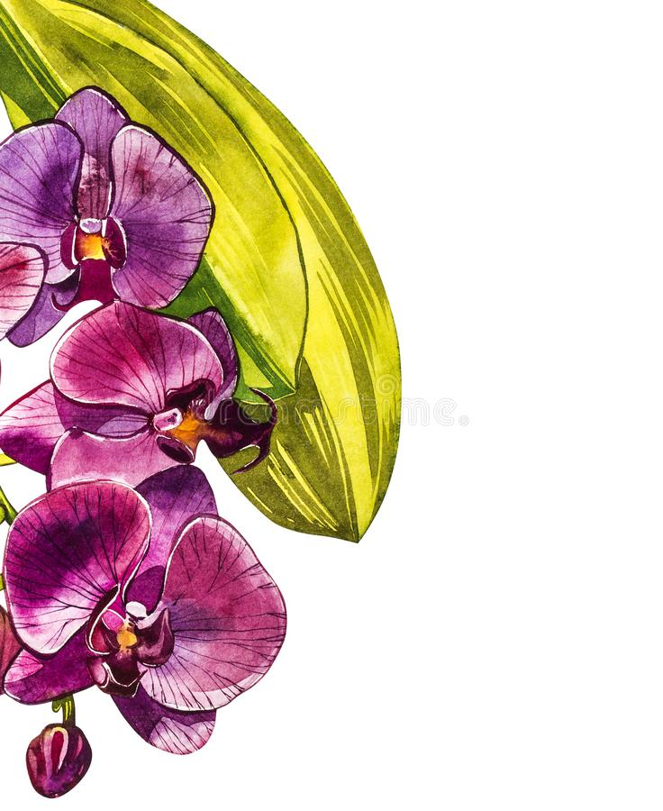 Branche d'orchidée d'aquarelle, illustration florale tirée par la main d'isolement sur un fond blanc Illustration d'aquarelle de  illustration stock
