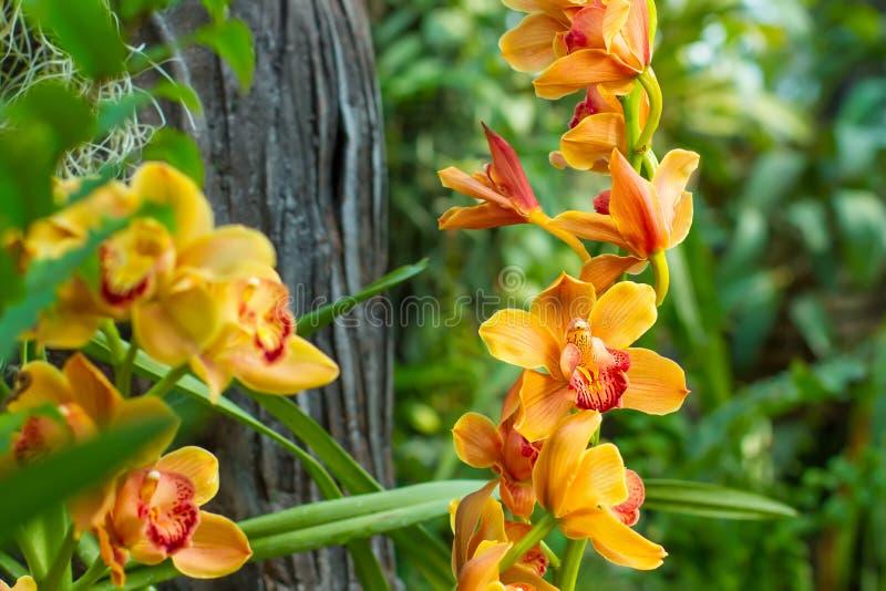 Branche d'orchidée jaune photos stock