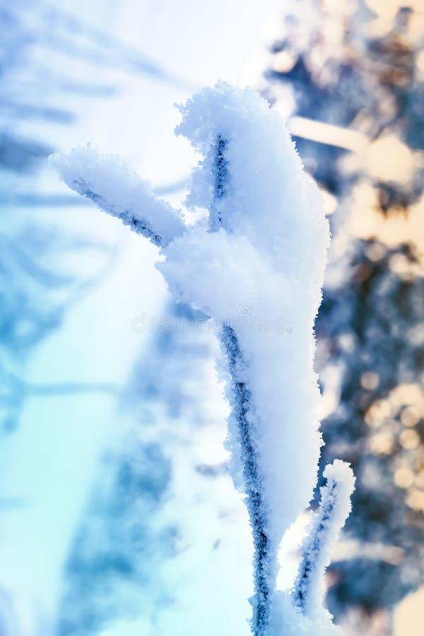 Branche d'un arbre à feuilles caduques dans le plan rapproché de neige et de gelée dans le ciel dans les rayons du soleil d'hiver image libre de droits