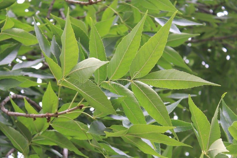 Branche d'un arbre photo stock