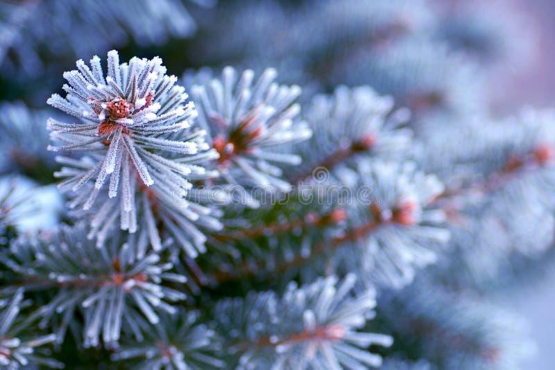 Branche d'un arbre de Noël dans le plan rapproché de neige image libre de droits