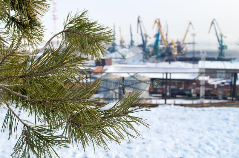 Branche d'un pin sur le paysage industriel brouillé de fond photos stock