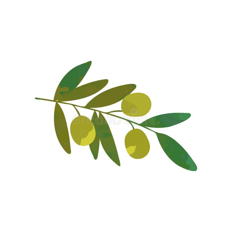 Branche de bande dessinée d'olivier avec les feuilles vertes Symbole traditionnel de paix Produit alimentaire d'aliment biologiqu illustration de vecteur