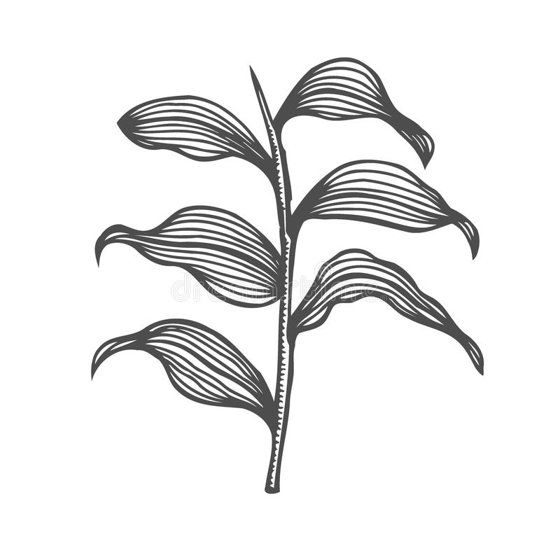 Branche de bouleau et branche de mélèze illustration de vecteur