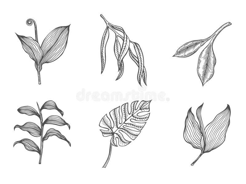 Branche de bouleau et branche de mélèze illustration stock