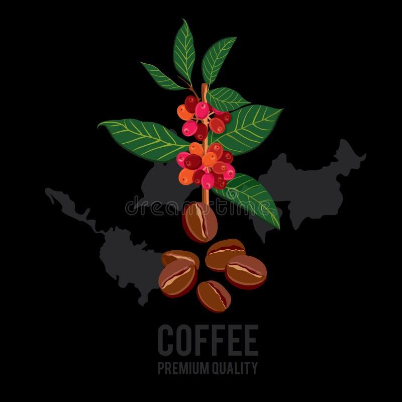 Branche de café illustration libre de droits