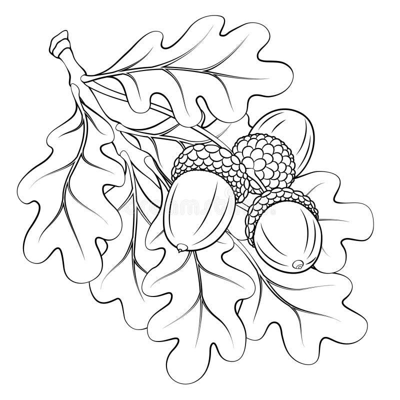 Branche de chêne avec des feuilles et des glands illustration libre de droits