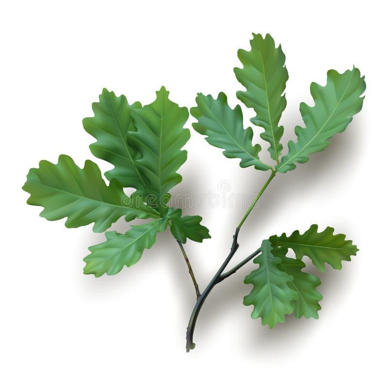 Branche de chêne avec les feuilles vertes illustration stock