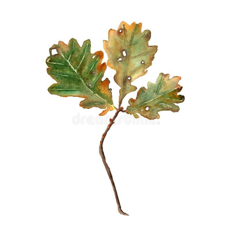 Branche de chêne d'automne d'aquarelle avec des feuilles sur un fond blanc Illustration tirée par la main Perfectionnez pour l'in illustration libre de droits