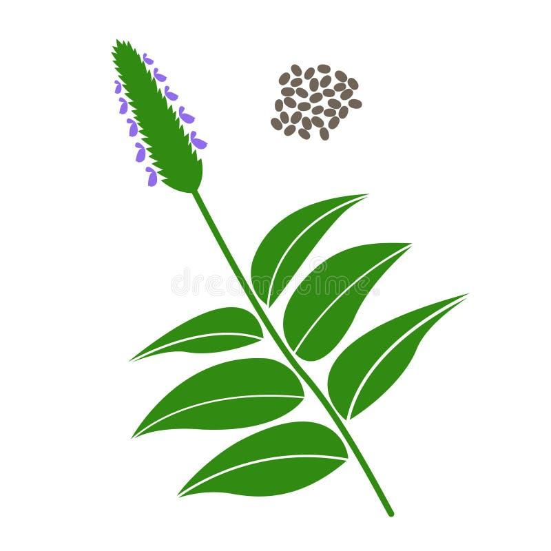 Branche de Chia et graines de chia illustration de vecteur