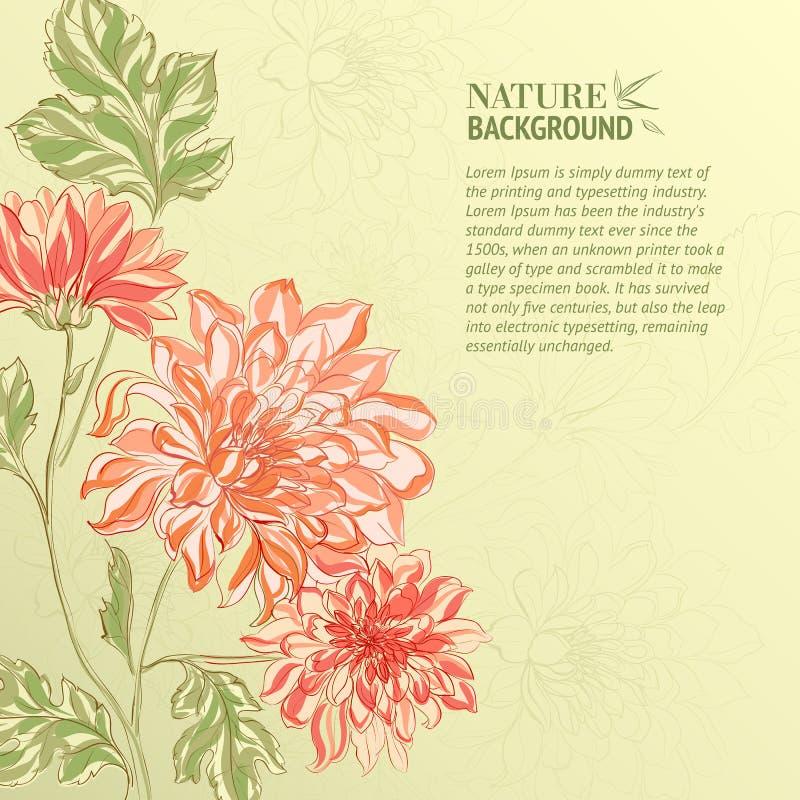 Branche de chrysanthème illustration stock