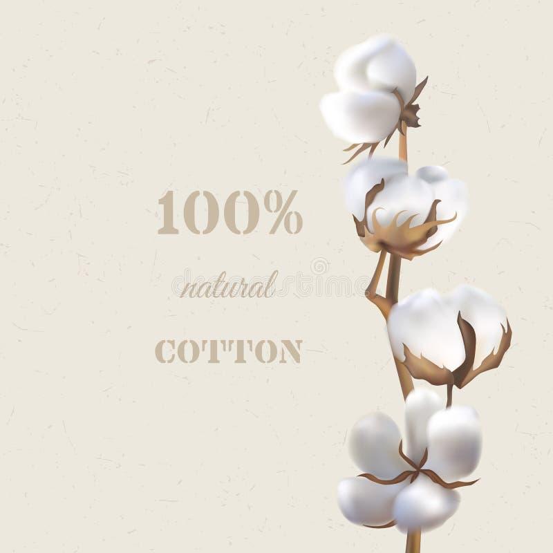 Branche de coton illustration de vecteur
